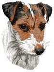 Jack Russell Terrier 4
